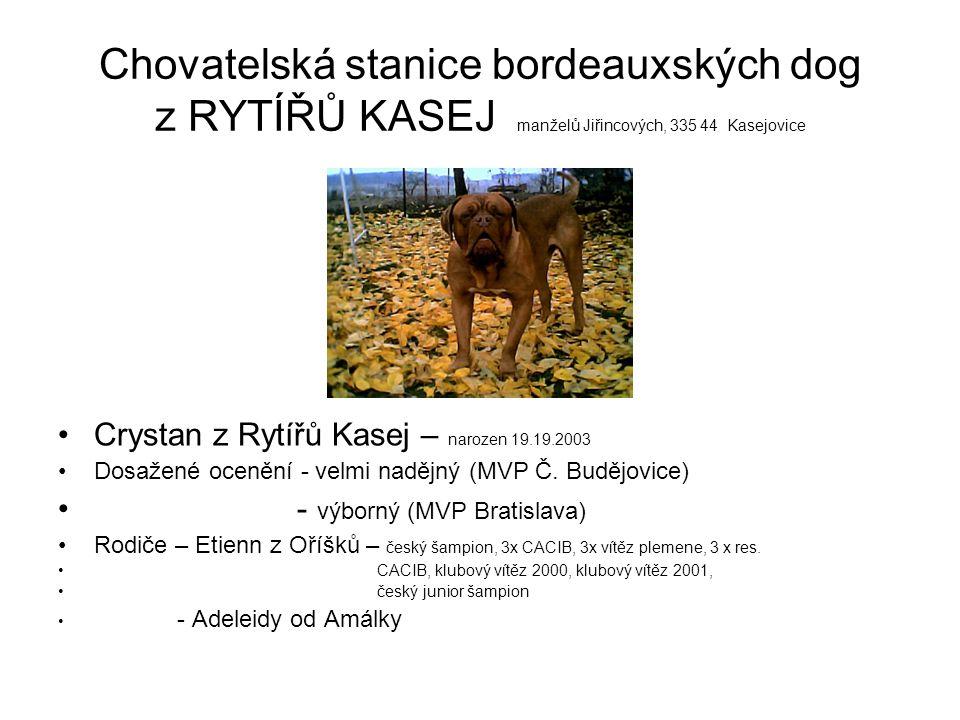 Chovatelská stanice bordeauxských dog z RYTÍŘŮ KASEJ manželů Jiřincových, 335 44 Kasejovice Crystan z Rytířů Kasej – narozen 19.19.2003 Dosažené ocenění - velmi nadějný (MVP Č.