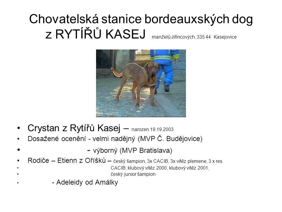 Chovatelská stanice bordeauxských dog z RYTÍŘŮ KASEJ manželů Jiřincových, 335 44 Kasejovice Carevna z Rytířů Kasej – narozena 19.09.2003 Dosažené ocenění - velmi nadějná (MVP Č.