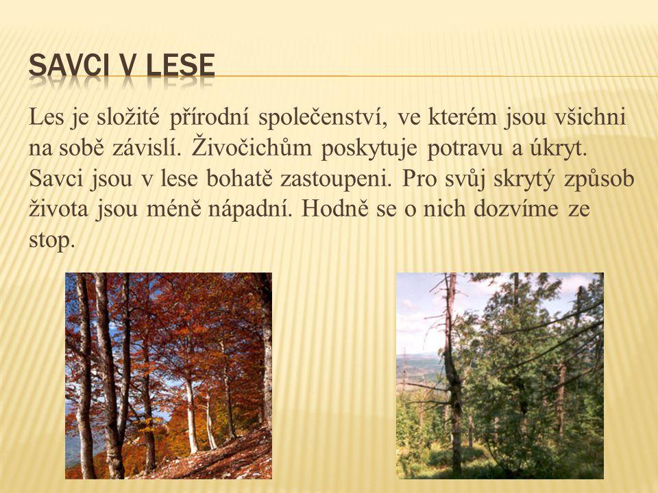 Les je složité přírodní společenství, ve kterém jsou všichni na sobě závislí. Živočichům poskytuje potravu a úkryt. Savci jsou v lese bohatě zastoupen