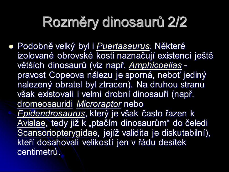 Rozměry dinosaurů 2/2 Podobně velký byl i Puertasaurus. Některé izolované obrovské kosti naznačují existenci ještě větších dinosaurů (viz např. Amphic