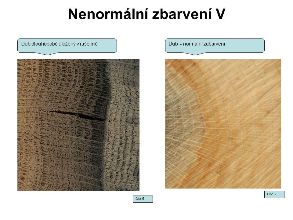 Nenormální zbarvení V Šedomodrá až rezavě hnědá barva - vzniká u rostoucích stromů ve formě pásů.