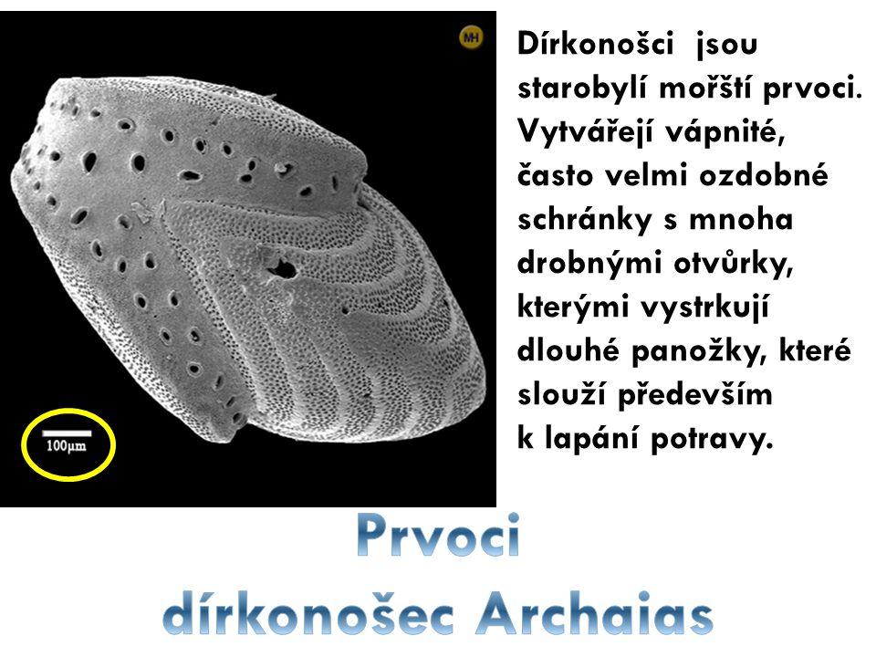 Dírkonošci jsou starobylí mořští prvoci. Vytvářejí vápnité, často velmi ozdobné schránky s mnoha drobnými otvůrky, kterými vystrkují dlouhé panožky, k