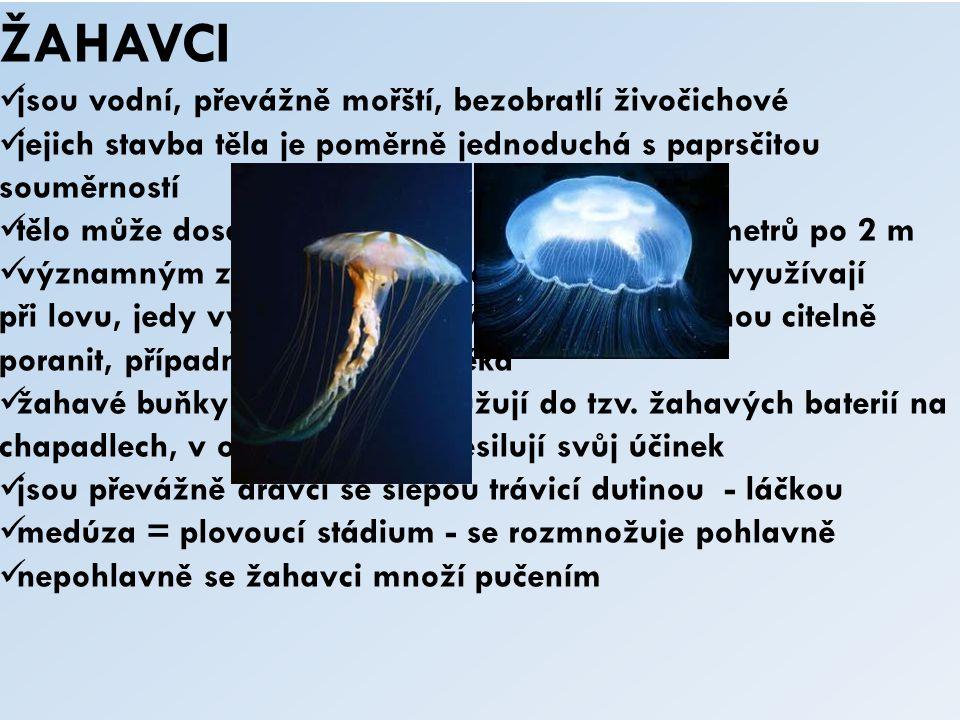 ŽAHAVCI jsou vodní, převážně mořští, bezobratlí živočichové jejich stavba těla je poměrně jednoduchá s paprsčitou souměrností tělo může dosahovat veli