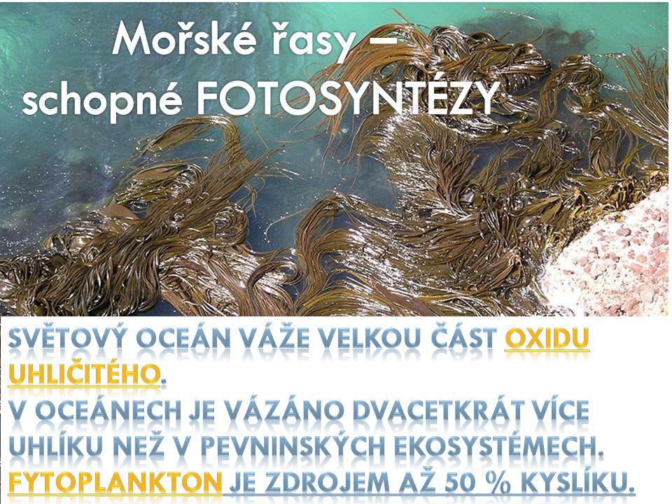 Sasanky jsou mořští draví živočichové.