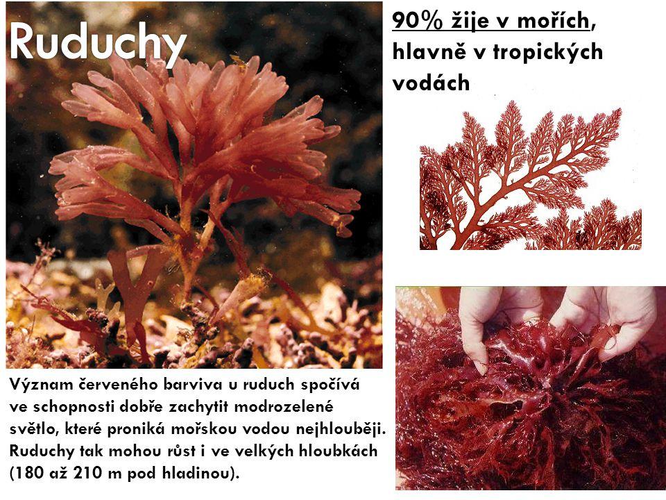 90% žije v mořích, hlavně v tropických vodách Význam červeného barviva u ruduch spočívá ve schopnosti dobře zachytit modrozelené světlo, které proniká