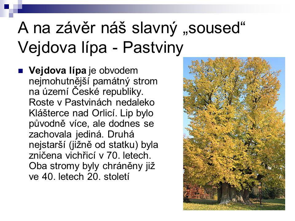 """A na závěr náš slavný """"soused Vejdova lípa - Pastviny Vejdova lípa je obvodem nejmohutnější památný strom na území České republiky."""