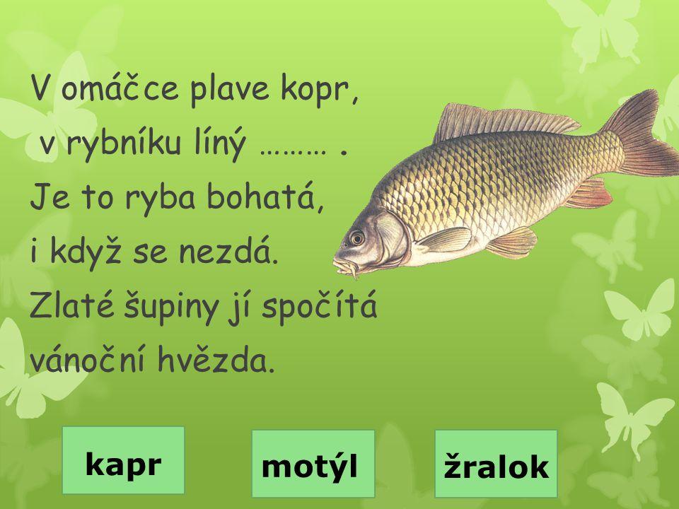 V omáčce plave kopr, v rybníku líný ………. Je to ryba bohatá, i když se nezdá. Zlaté šupiny jí spočítá vánoční hvězda. kapr motýl žralok