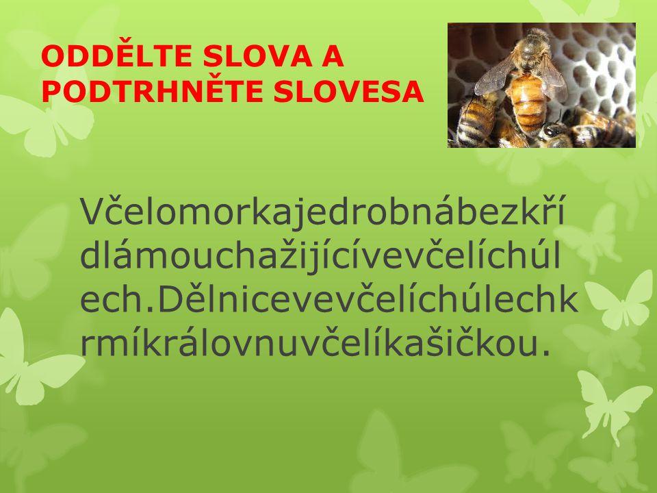 ODDĚLTE SLOVA A PODTRHNĚTE SLOVESA Včelomorkajedrobnábezkří dlámouchažijícívevčelíchúl ech.Dělnicevevčelíchúlechk rmíkrálovnuvčelíkašičkou.