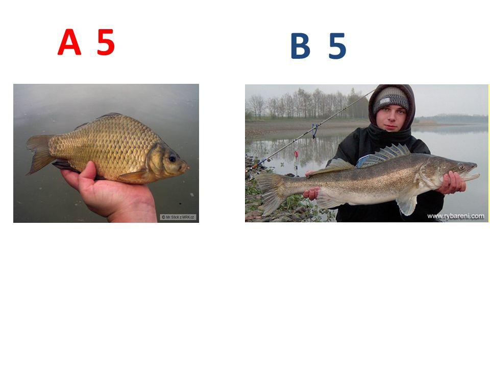 5 5 A B