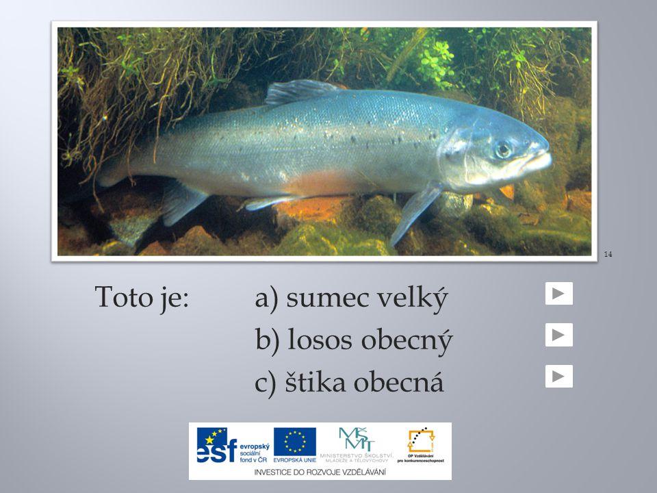 Toto je:a) sumec velký b) losos obecný c) štika obecná 14