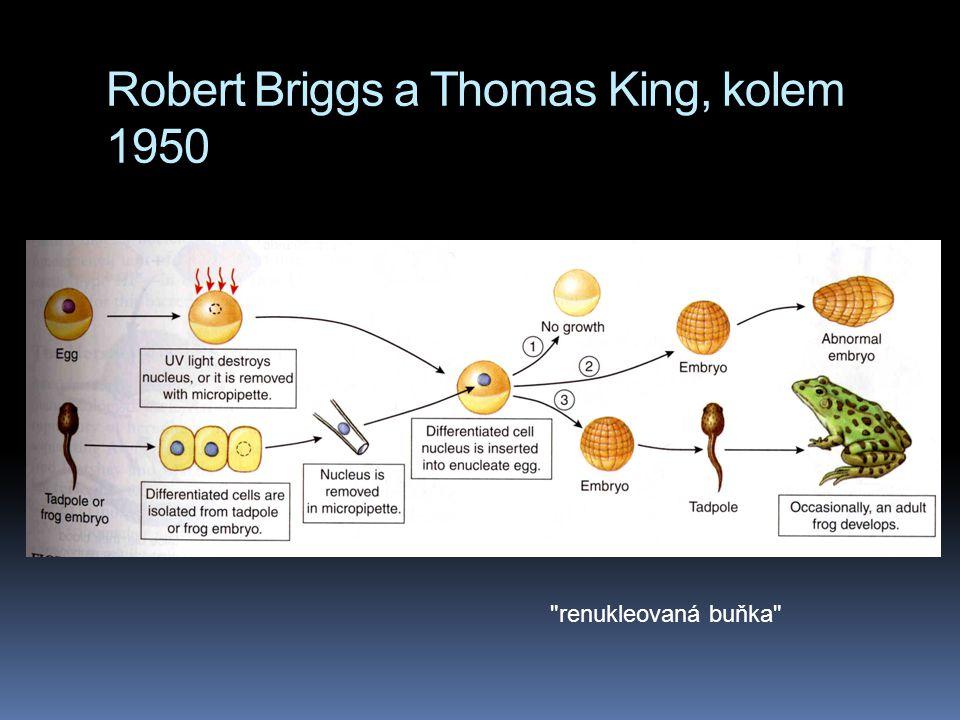 Robert Briggs a Thomas King, kolem 1950 renukleovaná buňka