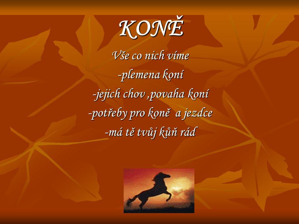 KONĚ Vše co nich víme -plemena koní -jejich chov,povaha koní -potřeby pro koně a jezdce -má tě tvůj kůň rád