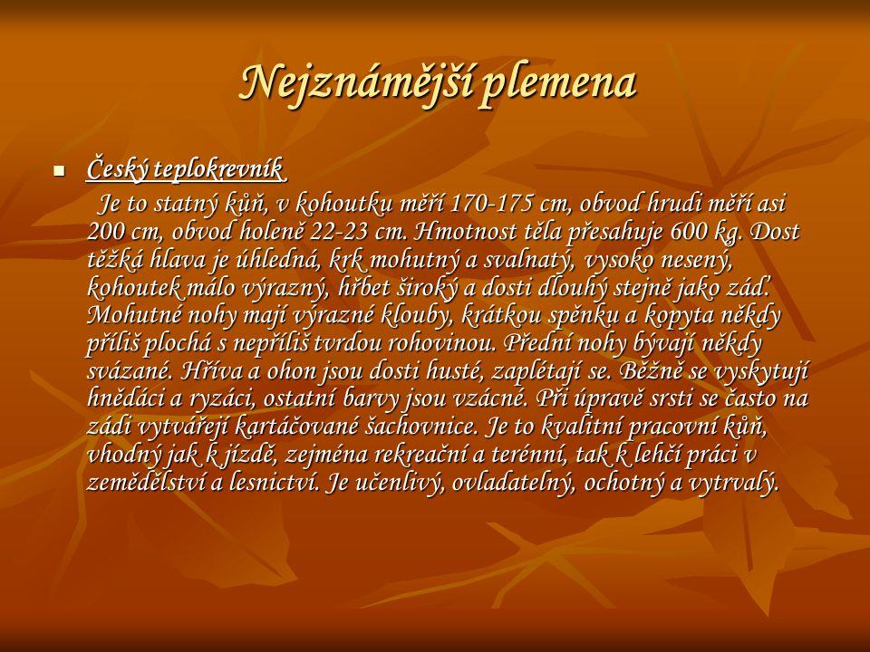 Nejznámější plemena Český teplokrevník Český teplokrevník Je to statný kůň, v kohoutku měří 170-175 cm, obvod hrudi měří asi 200 cm, obvod holeně 22-2