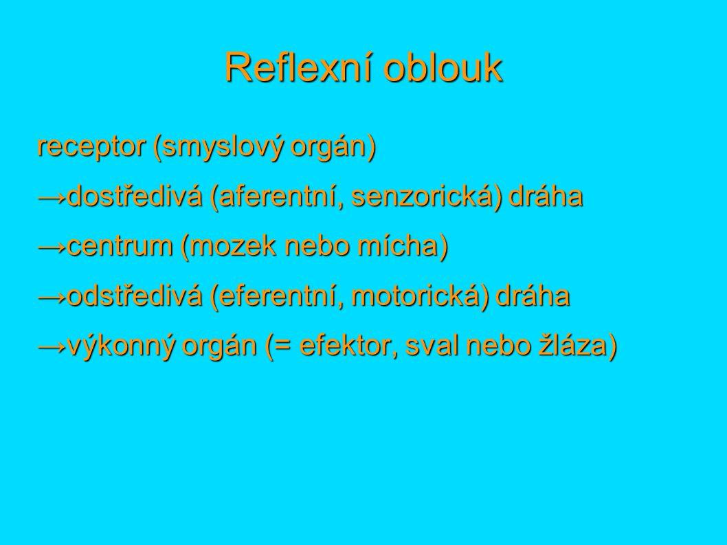 Reflexní oblouk receptor (smyslový orgán) →dostředivá (aferentní, senzorická) dráha →centrum (mozek nebo mícha) →odstředivá (eferentní, motorická) drá