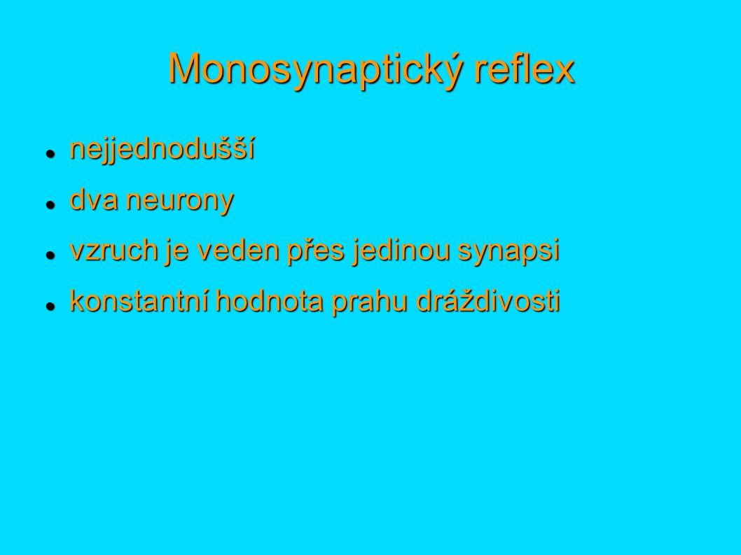 Polysynaptický reflex zapojeno 3 a více neuronů (interneurony) zapojeno 3 a více neuronů (interneurony) nekonstantní hodnota prahu dráždivosti (nepodléhá velkým výkyvům) nekonstantní hodnota prahu dráždivosti (nepodléhá velkým výkyvům) pomalejší pomalejší