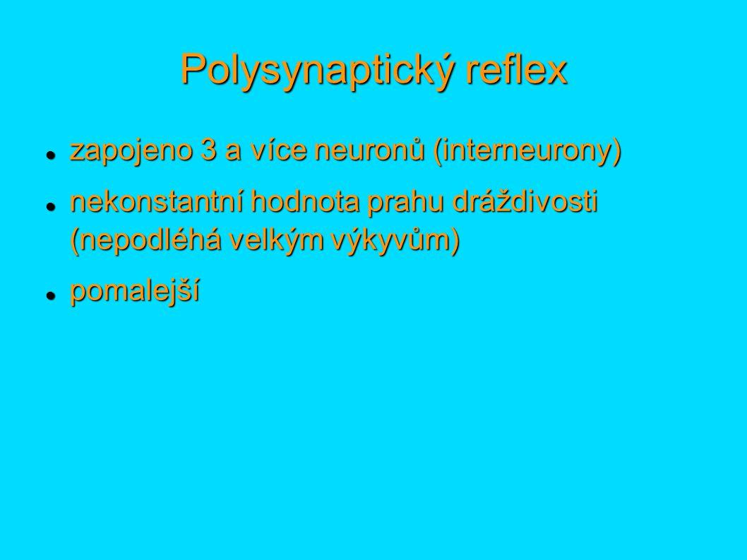 Polysynaptický reflex zapojeno 3 a více neuronů (interneurony) zapojeno 3 a více neuronů (interneurony) nekonstantní hodnota prahu dráždivosti (nepodl