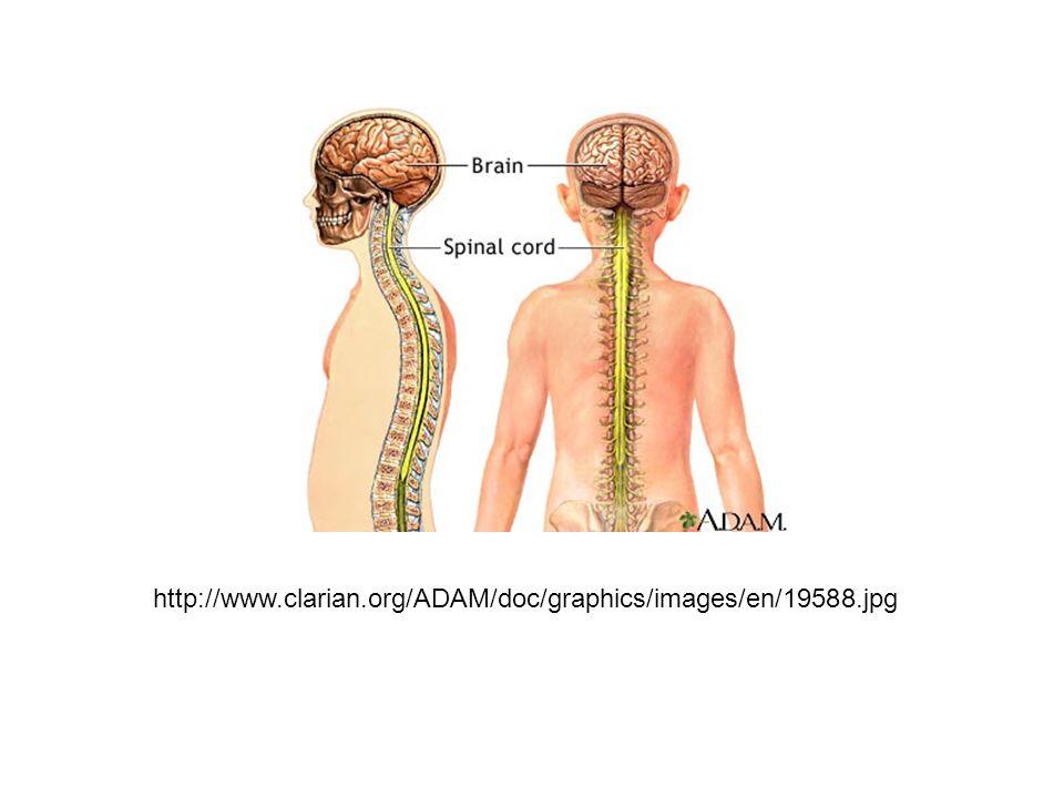 http://www.clarian.org/ADAM/doc/graphics/images/en/19588.jpg