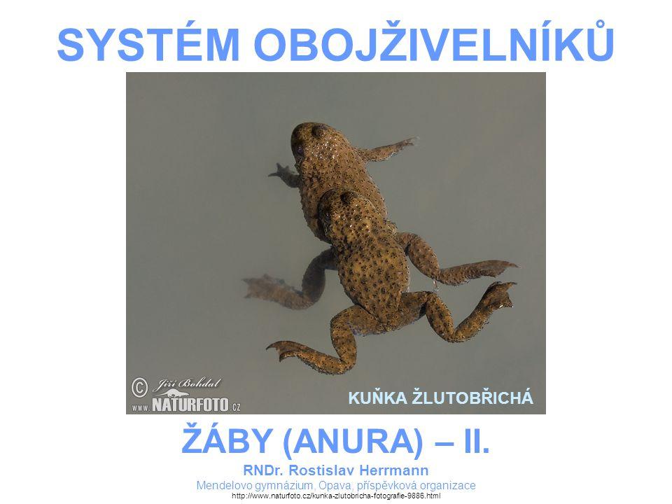 SYSTÉM OBOJŽIVELNÍKŮ RNDr. Rostislav Herrmann Mendelovo gymnázium, Opava, příspěvková organizace ŽÁBY (ANURA) – II. http://www.naturfoto.cz/kunka-zlut