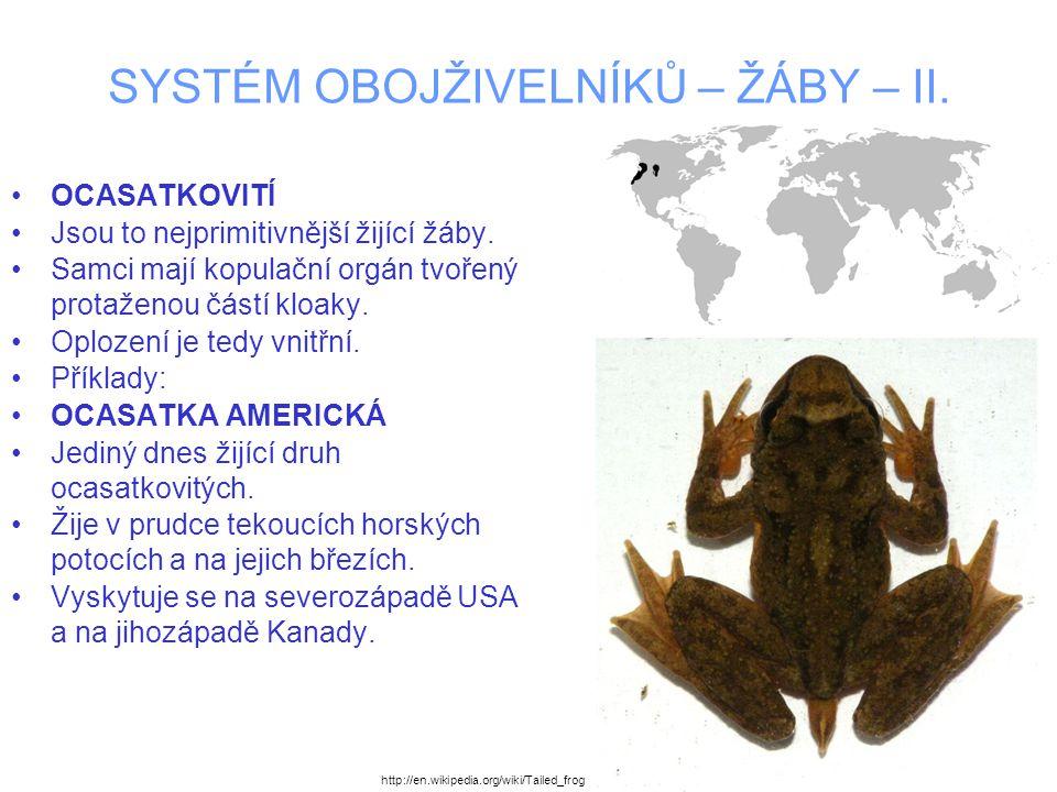 SYSTÉM OBOJŽIVELNÍKŮ – ŽÁBY – II. OCASATKOVITÍ Jsou to nejprimitivnější žijící žáby. Samci mají kopulační orgán tvořený protaženou částí kloaky. Oploz