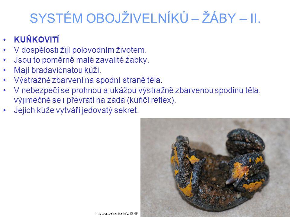 SYSTÉM OBOJŽIVELNÍKŮ – ŽÁBY – II. KUŇKOVITÍ V dospělosti žijí polovodním životem. Jsou to poměrně malé zavalité žabky. Mají bradavičnatou kůži. Výstra