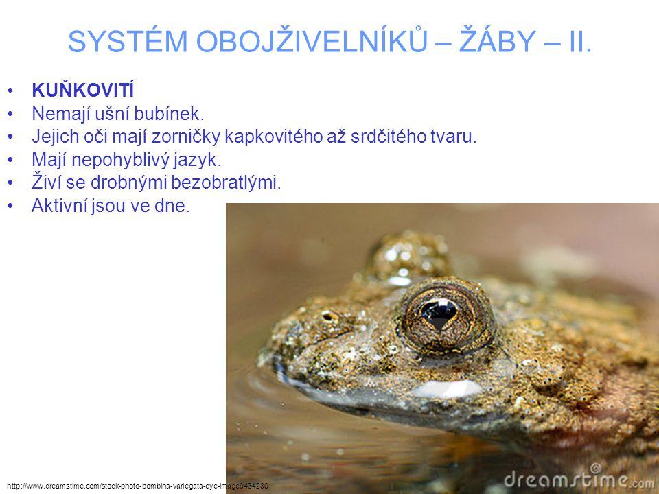 SYSTÉM OBOJŽIVELNÍKŮ – ŽÁBY – II. KUŇKOVITÍ Nemají ušní bubínek. Jejich oči mají zorničky kapkovitého až srdčitého tvaru. Mají nepohyblivý jazyk. Živí