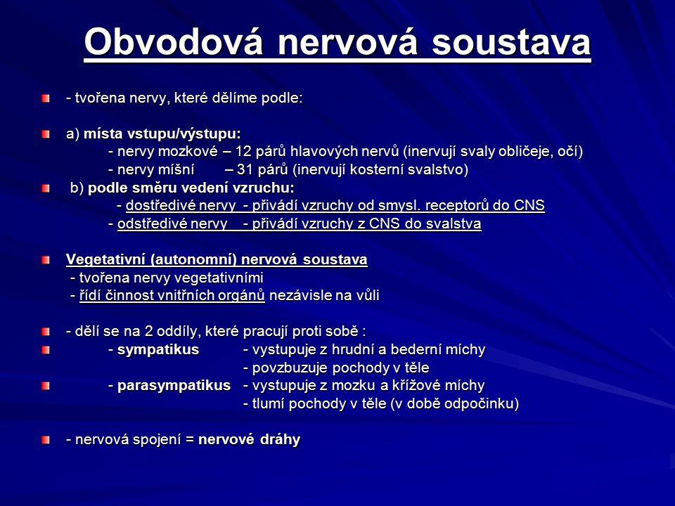 Obvodová nervová soustava - tvořena nervy, které dělíme podle: a) místa vstupu/výstupu: - nervy mozkové – 12 párů hlavových nervů (inervují svaly obli