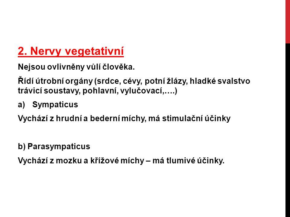 2.Nervy vegetativní Nejsou ovlivněny vůlí člověka.