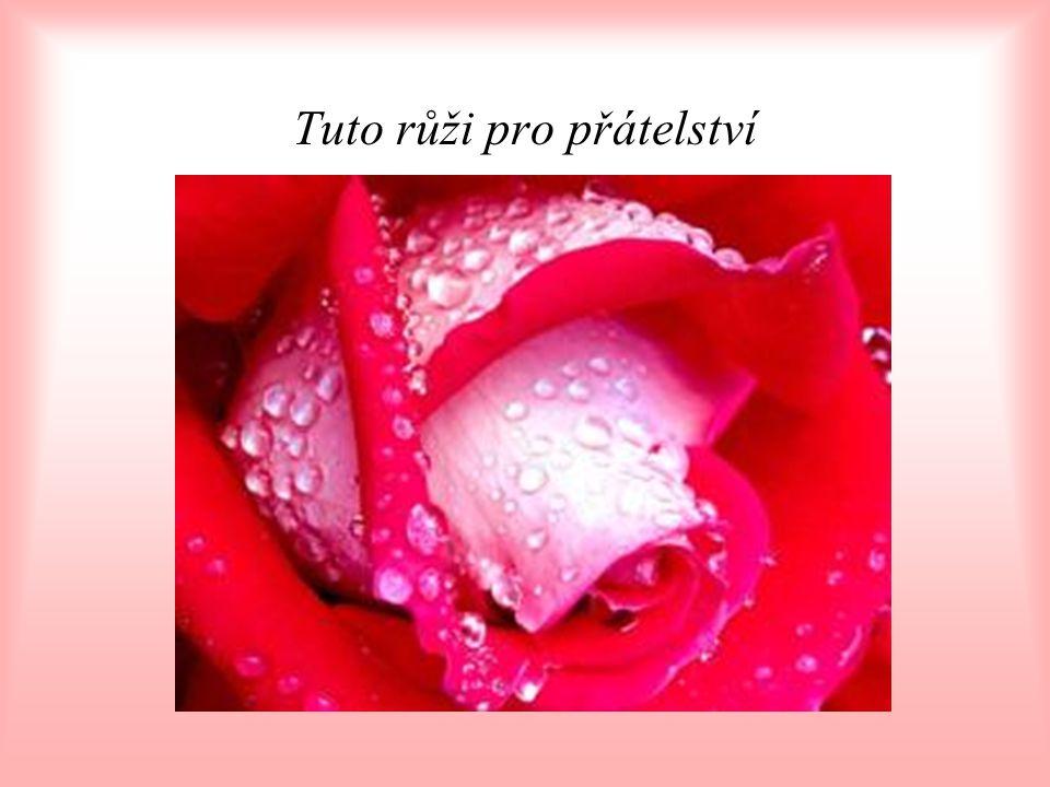 Tuto růži pro přátelství