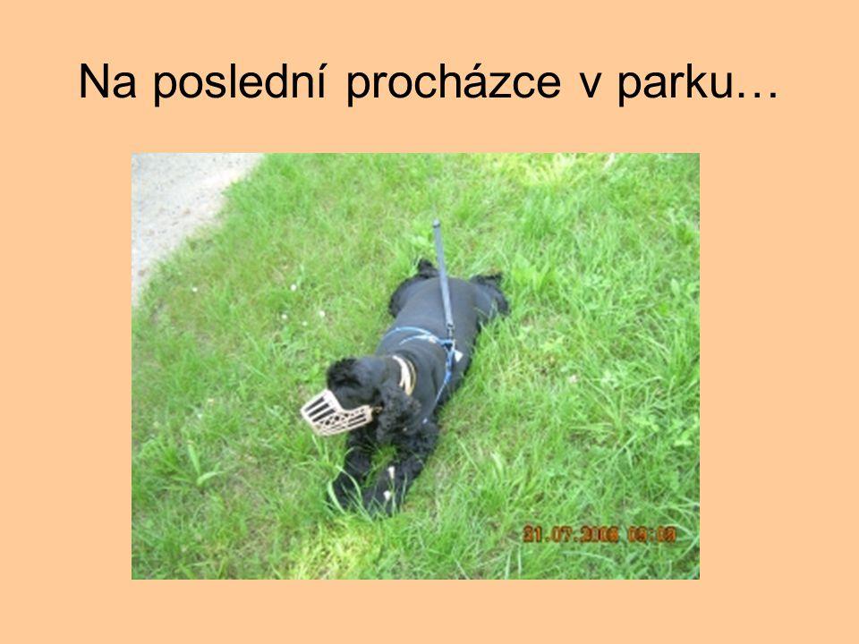 Na poslední procházce v parku…