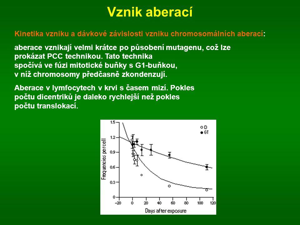 Vznik aberací Kinetika vzniku a dávkové závislosti vzniku chromosomálních aberací: aberace vznikají velmi krátce po působení mutagenu, což lze prokáza