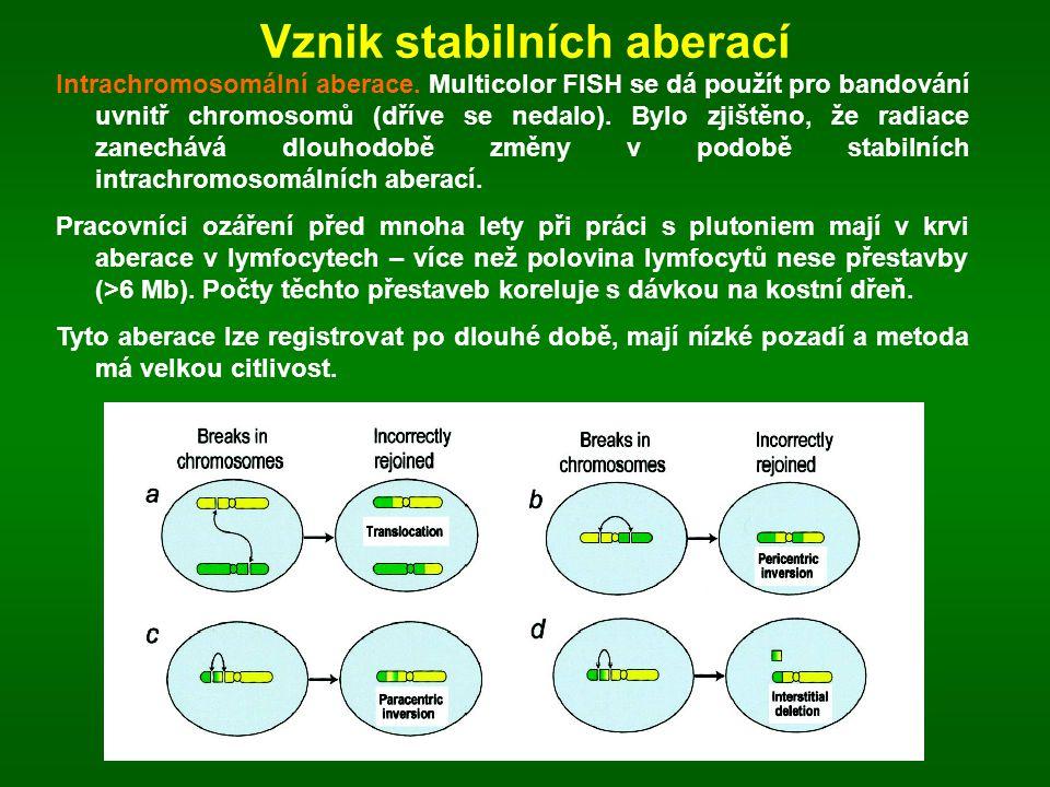Vznik stabilních aberací Intrachromosomální aberace. Multicolor FISH se dá použít pro bandování uvnitř chromosomů (dříve se nedalo). Bylo zjištěno, že