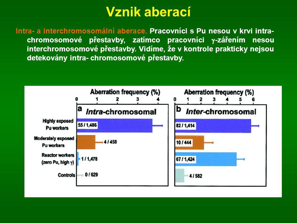 Vznik aberací Intra- a interchromosomální aberace. Pracovníci s Pu nesou v krvi intra- chromosomové přestavby, zatímco pracovníci  -zářením nesou int