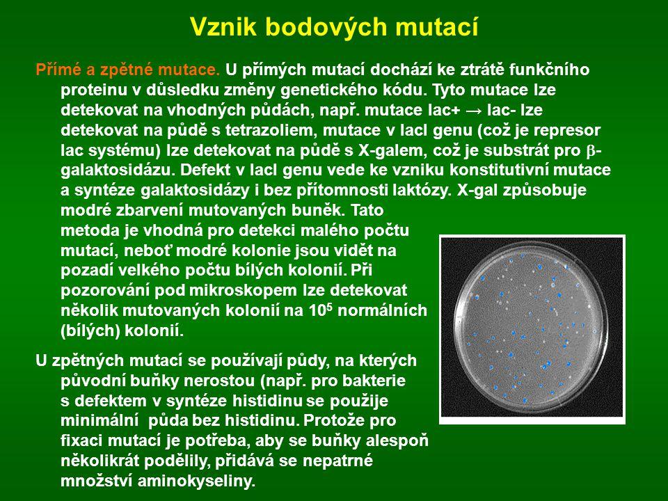 Vznik bodových mutací Přímé a zpětné mutace. U přímých mutací dochází ke ztrátě funkčního proteinu v důsledku změny genetického kódu. Tyto mutace lze