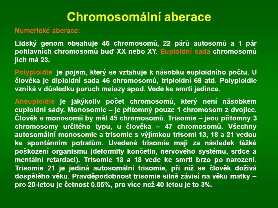 Chromosomální aberace Numerické aberace: Lidský genom obsahuje 46 chromosomů, 22 párů autosomů a 1 pár pohlavních chromosomů buď XX nebo XY. Euploidní