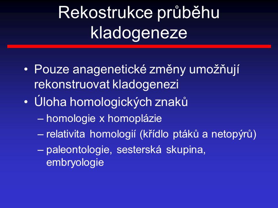 Rekostrukce průběhu kladogeneze Pouze anagenetické změny umožňují rekonstruovat kladogenezi Úloha homologických znaků –homologie x homoplázie –relativita homologií (křídlo ptáků a netopýrů) –paleontologie, sesterská skupina, embryologie