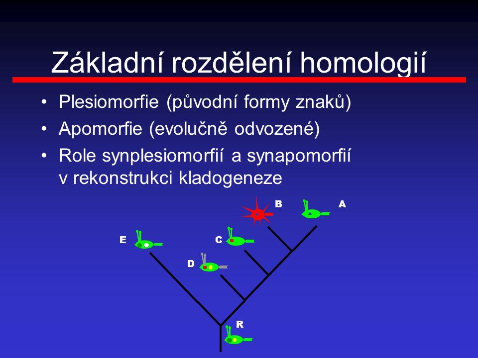 Základní rozdělení homologií Plesiomorfie (původní formy znaků) Apomorfie (evolučně odvozené) Role synplesiomorfií a synapomorfií v rekonstrukci kladogeneze R BA CE D