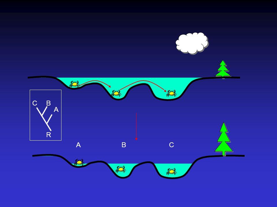 Zakořeněné a nezakořeněné stromy B A C A B C R R R ABCABC CB A N U = [(2N - 5)!]/[2 N-3 (N-3)!] N Ri = N U(i + 1)