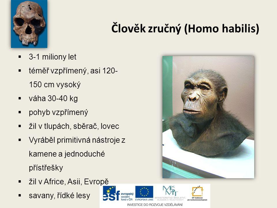 Člověk zručný (Homo habilis)  3-1 miliony let  téměř vzpřímený, asi 120- 150 cm vysoký  váha 30-40 kg  pohyb vzpřímený  žil v tlupách, sběrač, lo