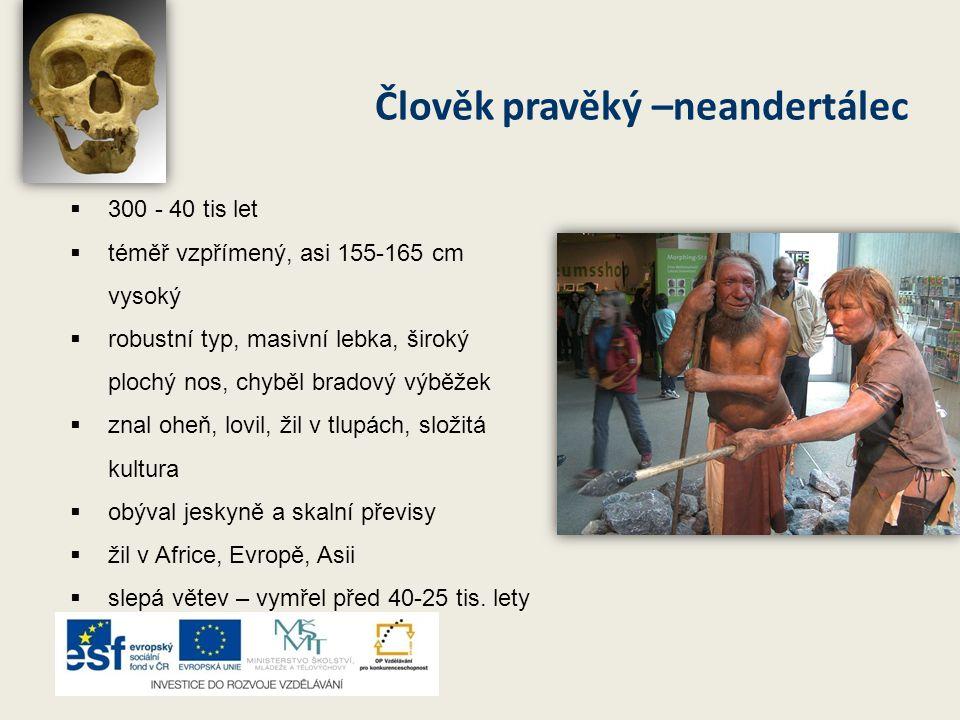 Člověk pravěký –neandertálec  300 - 40 tis let  téměř vzpřímený, asi 155-165 cm vysoký  robustní typ, masivní lebka, široký plochý nos, chyběl brad