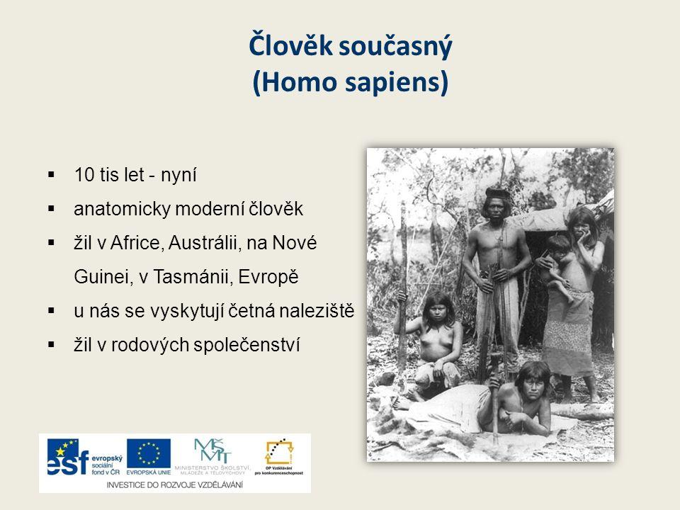 Člověk současný (Homo sapiens) 110 tis let - nyní aanatomicky moderní člověk žžil v Africe, Austrálii, na Nové Guinei, v Tasmánii, Evropě uu n
