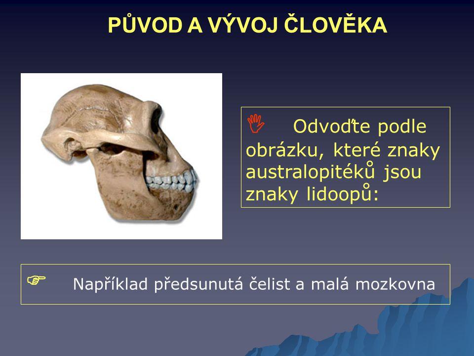 PŮVOD A VÝVOJ ČLOVĚKA  Odvoďte podle obrázku, které znaky australopitéků jsou znaky lidoopů:  Například předsunutá čelist a malá mozkovna