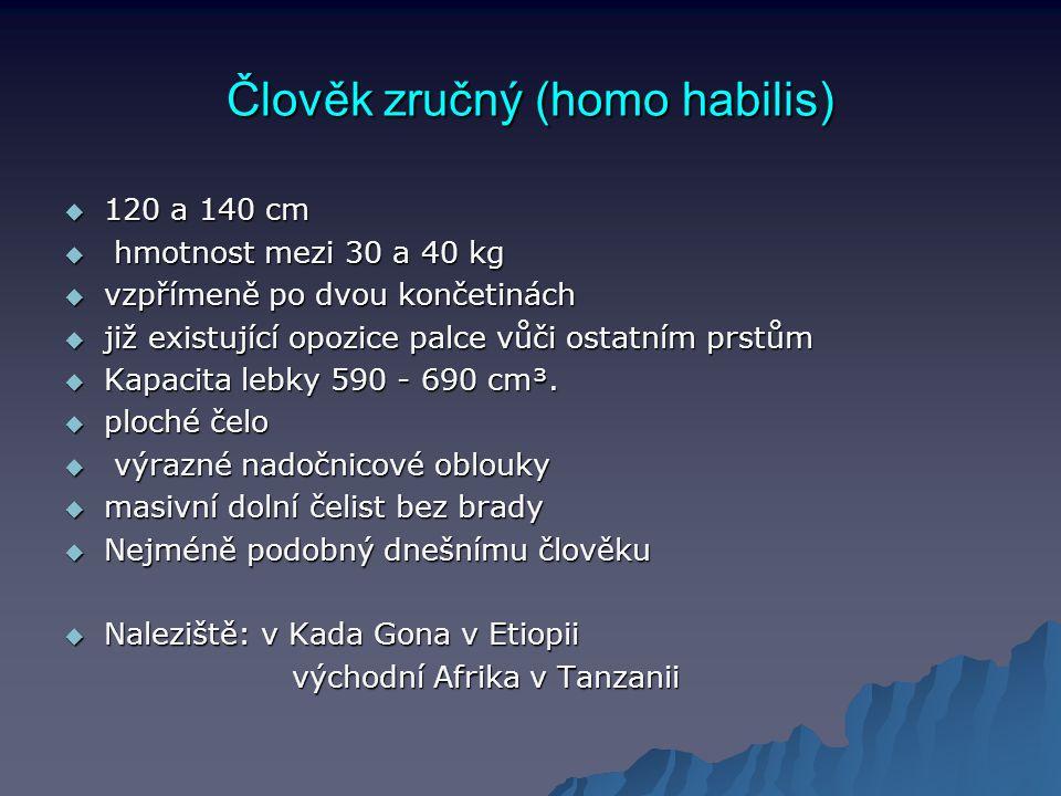 Člověk zručný (homo habilis)  120 a 140 cm  hmotnost mezi 30 a 40 kg  vzpřímeně po dvou končetinách  již existující opozice palce vůči ostatním pr
