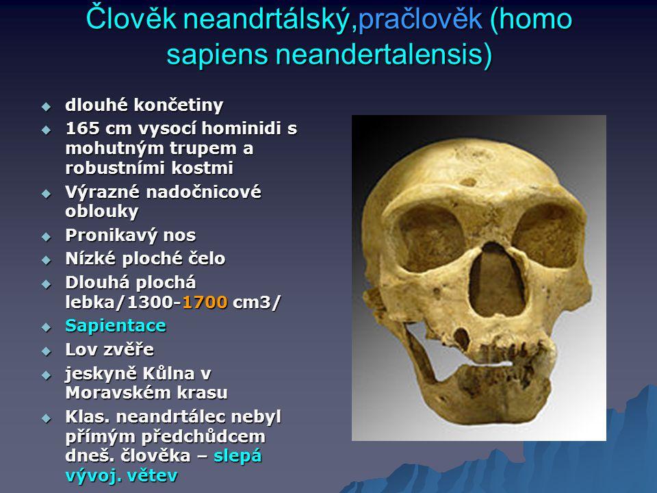 Člověk neandrtálský,pračlověk (homo sapiens neandertalensis)  dlouhé končetiny  165 cm vysocí hominidi s mohutným trupem a robustními kostmi  Výraz