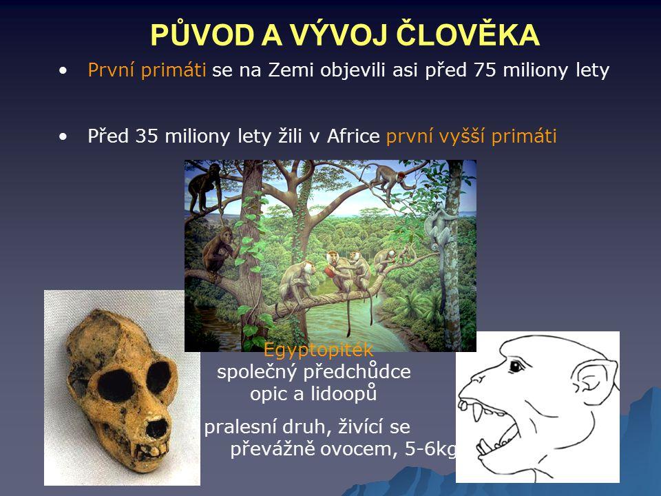 PŮVOD A VÝVOJ ČLOVĚKA První primáti se na Zemi objevili asi před 75 miliony lety Před 35 miliony lety žili v Africe první vyšší primáti Egyptopiték sp