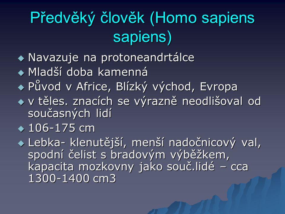 Předvěký člověk (Homo sapiens sapiens)  Navazuje na protoneandrtálce  Mladší doba kamenná  Původ v Africe, Blízký východ, Evropa  v těles. znacích