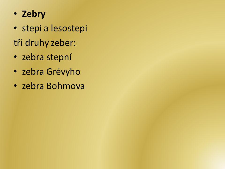 Zebry stepi a lesostepi tři druhy zeber: zebra stepní zebra Grévyho zebra Bohmova