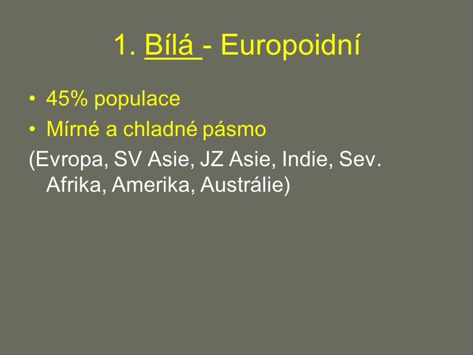 1. Bílá - Europoidní 45% populace Mírné a chladné pásmo (Evropa, SV Asie, JZ Asie, Indie, Sev.