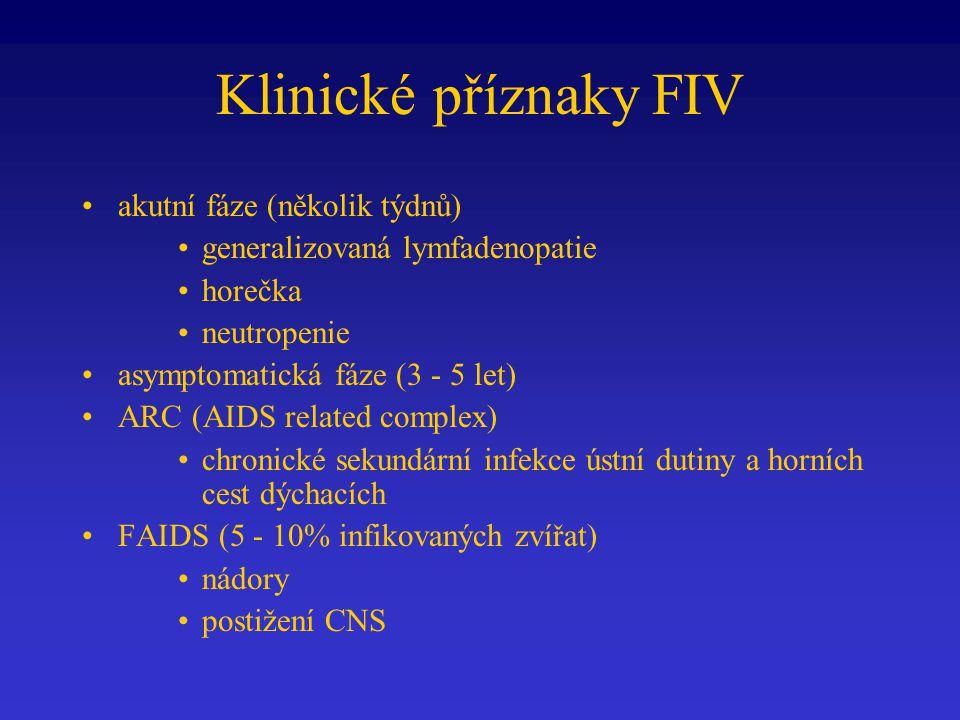 Klinické příznaky FIV akutní fáze (několik týdnů) generalizovaná lymfadenopatie horečka neutropenie asymptomatická fáze (3 - 5 let) ARC (AIDS related complex) chronické sekundární infekce ústní dutiny a horních cest dýchacích FAIDS (5 - 10% infikovaných zvířat) nádory postižení CNS