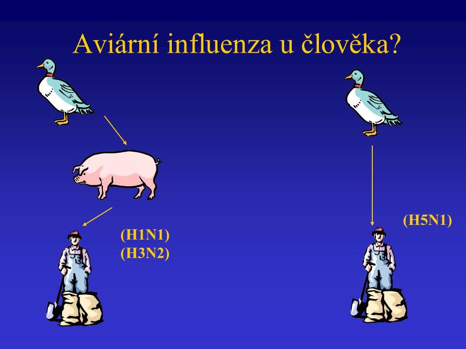 (H5N1) (H1N1) (H3N2) Aviární influenza u člověka?