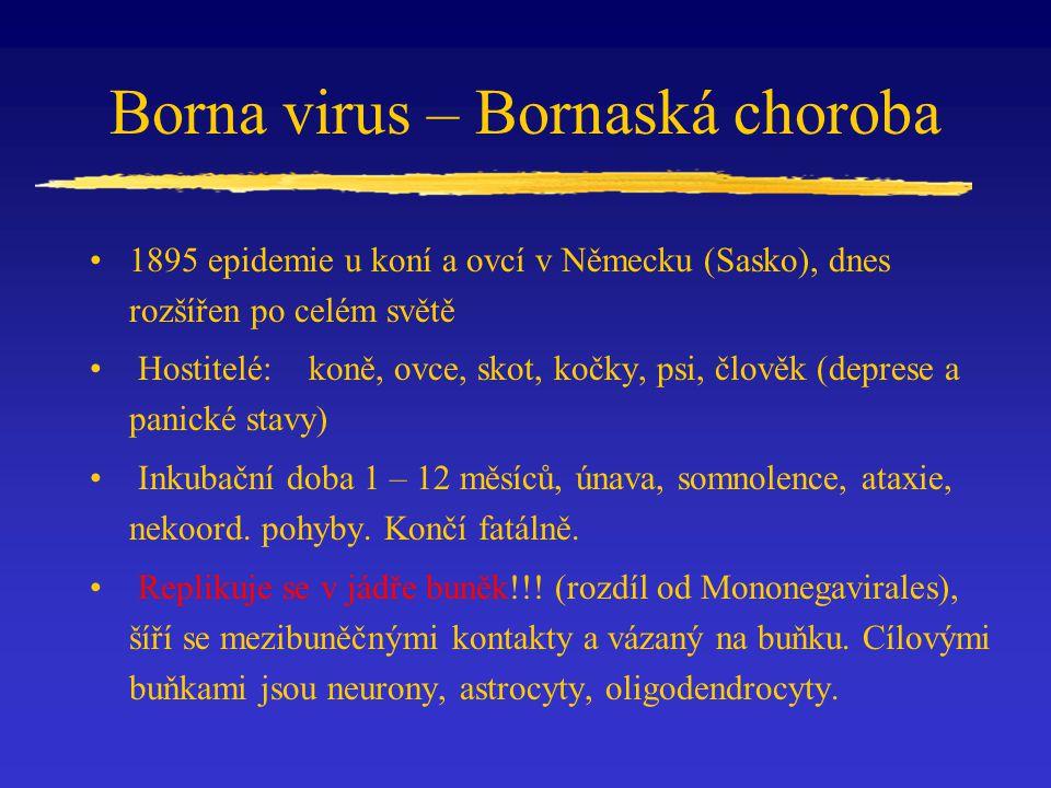 Borna virus – Bornaská choroba 1895 epidemie u koní a ovcí v Německu (Sasko), dnes rozšířen po celém světě Hostitelé: koně, ovce, skot, kočky, psi, člověk (deprese a panické stavy) Inkubační doba 1 – 12 měsíců, únava, somnolence, ataxie, nekoord.